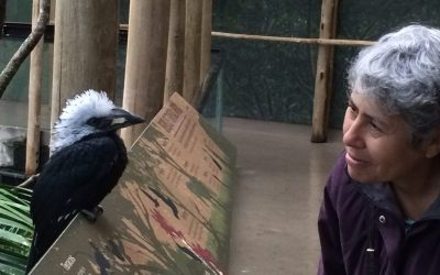 Me and hornbill